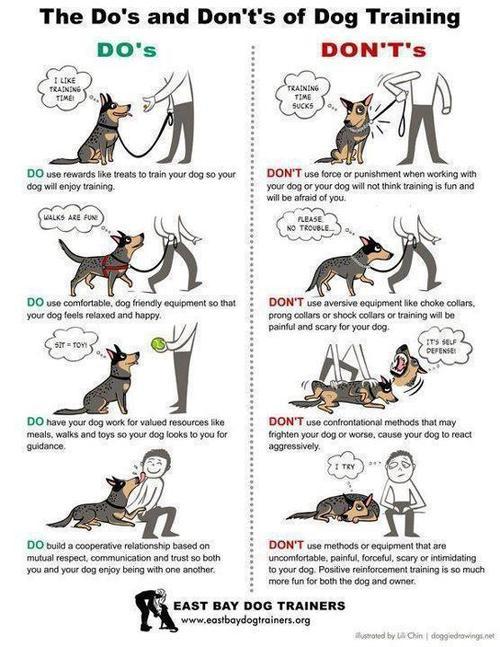 http://www.braveheartdogtraining.net/EastBayDogTrainersHome.html