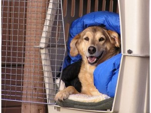 happy-dog-crate-300x225
